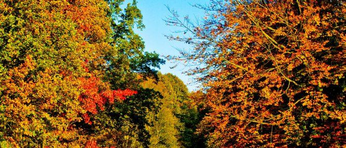 Vijver in het Haagse Bos