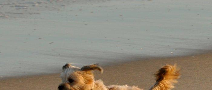 Hond los op het strand