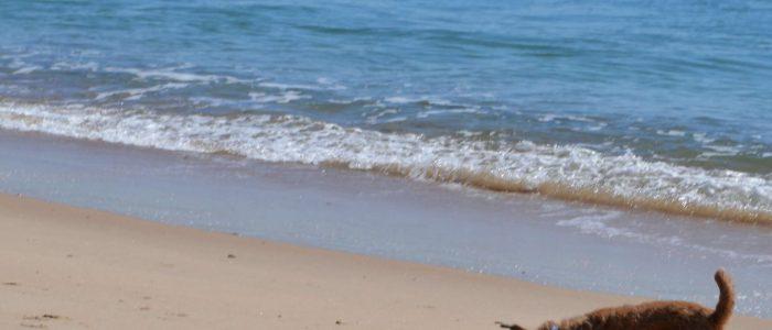 Twee honden spelen op het strand