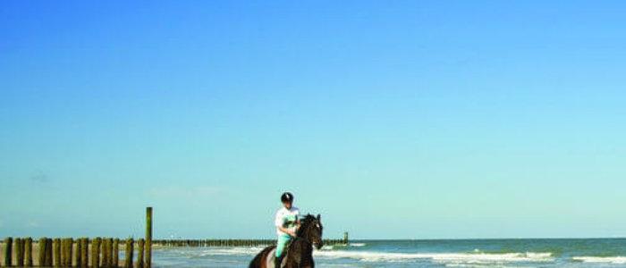 Paardrijden aan de kustlijn