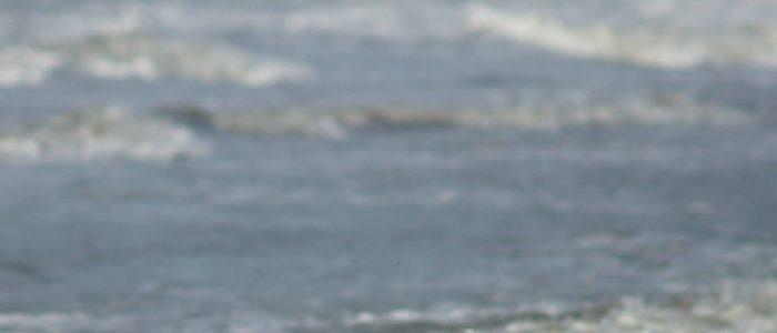 Honden op het strand van Wassenaarseslag
