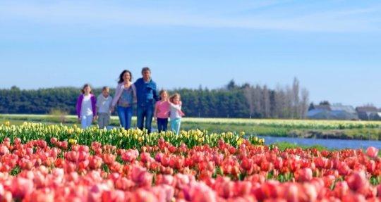 Familie wandelt tussen de bollenvelden